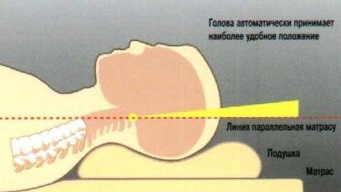 Основной эффект применения ортопедической подушки основан на том, что ее контуры соответствуют естественному изгибу шеи