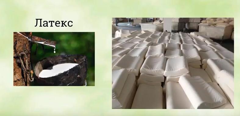 Латекс – природный упругий материал