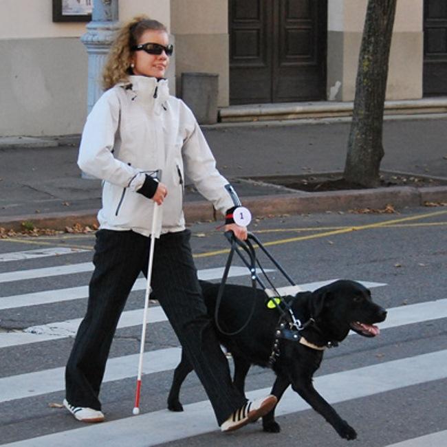 Как правило, собак-поводырей используют вместе с тростями (для дополнительной безопасности)