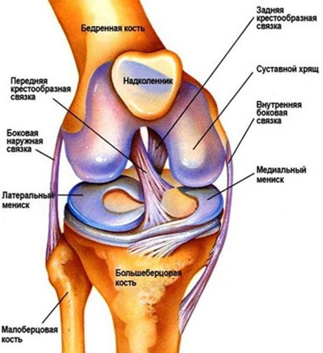Связки состоят из прочных волокон соединительной ткани, которые стабилизируют коленный сустав